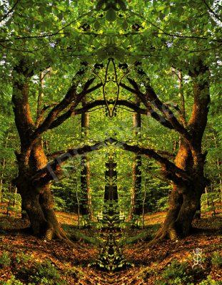 Tor zum Sonnenwald