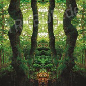 TREBOR - Magischer Wald