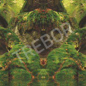 TREBOR - Der Grüne Bär