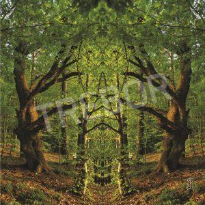 TREBOR - Tor zum Sonnenwald