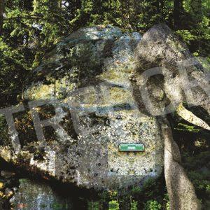 TREBOR - Waldelefant