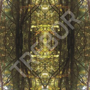 TREBOR - Forest mirror